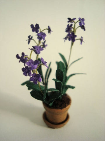 Orchid Plant, Purple