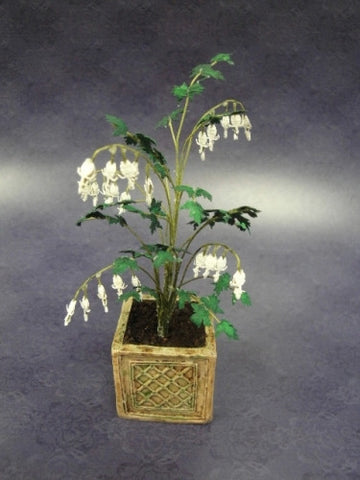Bleeding Heart Plant, White, by Paula Gilhooley