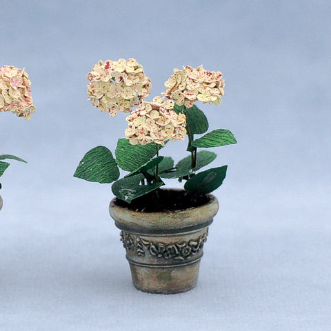 Potted Hydrangea, Soft Pink and White
