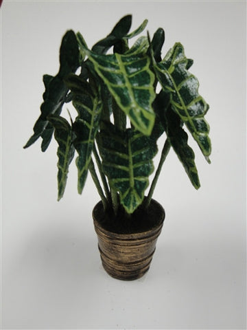 Alocasia Plant in Gold Planter OUT OF STOCK
