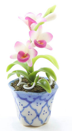 Pink Orchid in Blue and White Pot