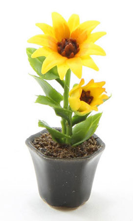 Sunflower Plant in Black Vase