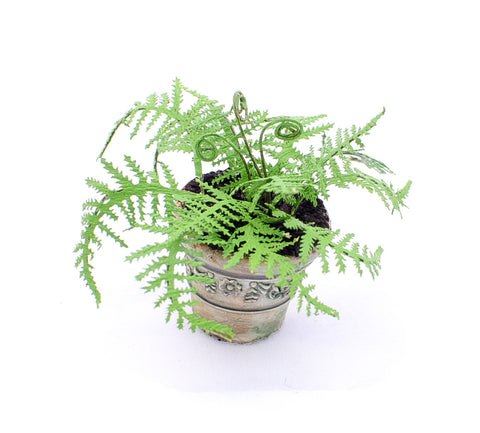 Potted Fern, Grey Pot