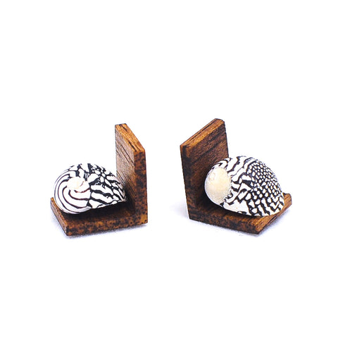 Bookends, Zebra Nerite Seashell