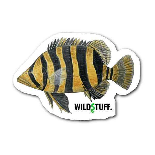 Indonesian Tigerfish Decal