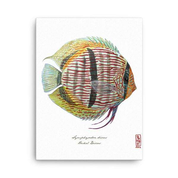 Discus Canvas