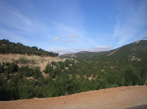Argan forest Morocco