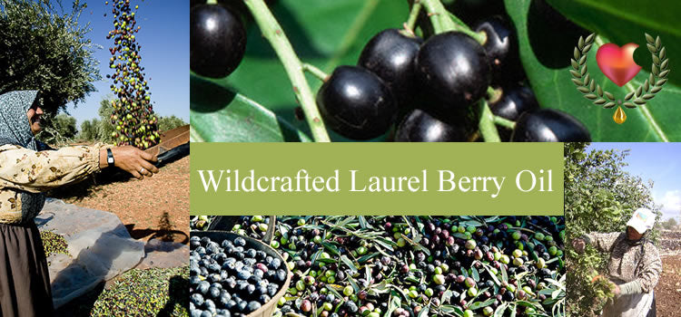 Learn about Laurel Berry Oil