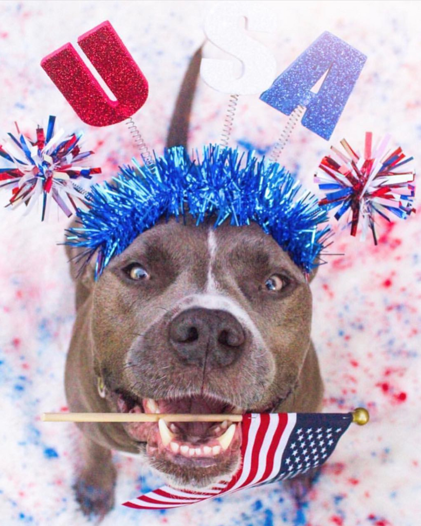 How To Keep Your Pet Calm During The Fireworks