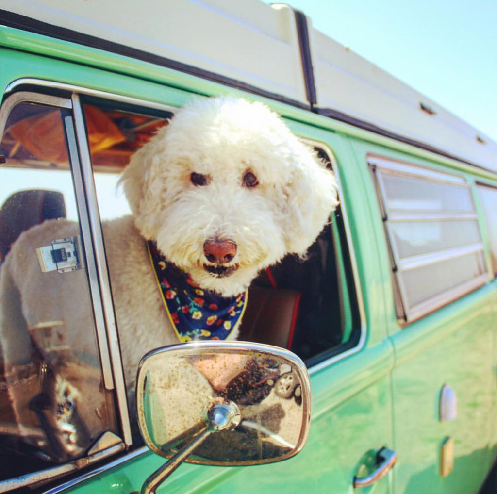 Tips For Traveling with Your Furry Friend