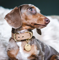 Dog Leather Collar Dog Collar- Coco and Pistachio