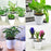 Self Watering Flower Pot (Various Sizes)