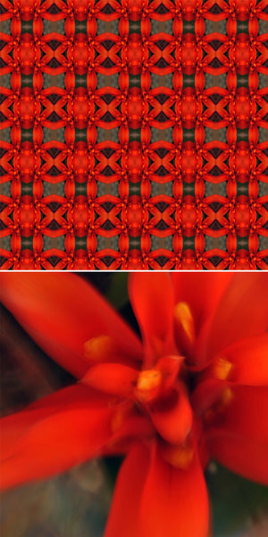 red flowers city  HND03
