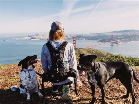Marin headlands dog friendly hike