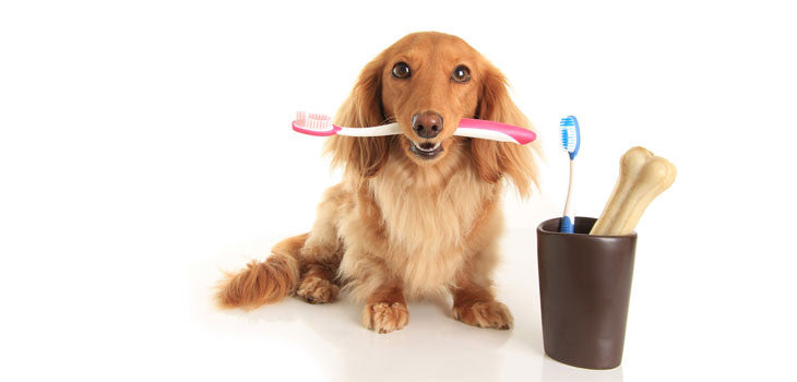 The Importance Of Dog's Dental Care