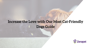 Increase the Love with Our Most Cat-Friendly Dogs Guide
