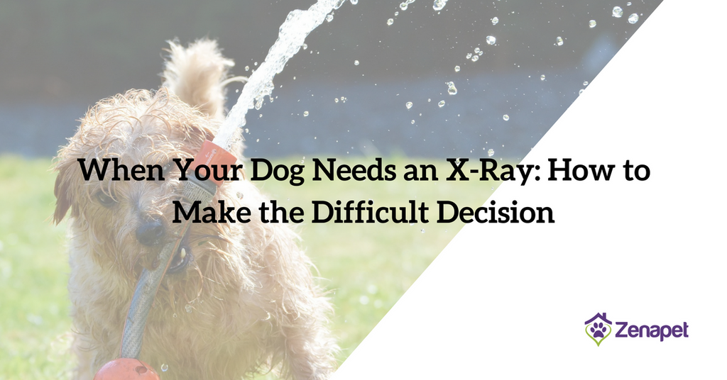 When Your Dog Needs an X-Ray: How to Make the Difficult Decision