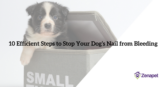 10 Efficient Steps to Stop Your Dog's Nail from Bleeding