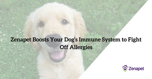 Zenapet Boosts Your Dog's Immune System to Fight Off Allergies