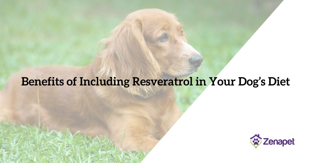 Benefits of Including Resveratrol in Your Dog's Diet