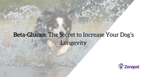 Beta-Glucan: The Secret to Increasing Your Dog's Longevity