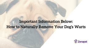 How to Naturally Remove Your Dog's Warts