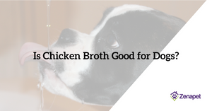 Is Chicken Broth Good for Dogs? (Finally, the Truth Revealed!)