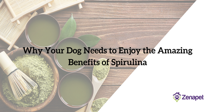 Why Your Dog Needs to Enjoy the Amazing Benefits of Spirulina