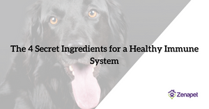 The Four (Not So) Secret Ingredients for a Healthy Immune System