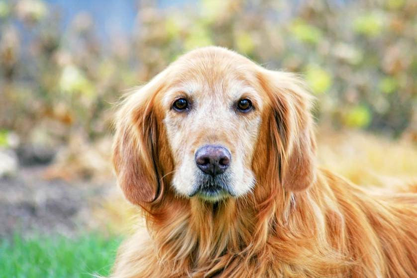 How To Help Your Aging Dog Stay Mentally Sharp