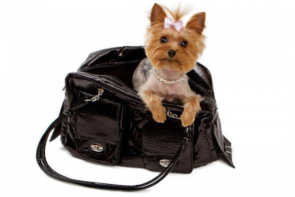 Top 5 Most Poisonous Purse Contents For Dogs