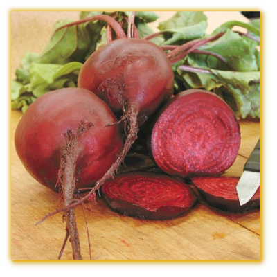 Beet Early Wonder
