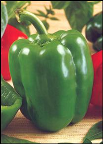 GVS 43221 F1 Sweet Bell Pepper