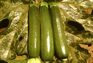 Emerald Green F1 Summer Green Zucchini