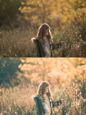 Gold Fox Collection | Lightroom Presets