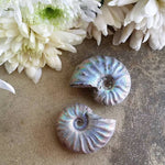 Ammonite, Blue Iridescent (1 PIECE)