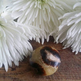 Septarian (small)