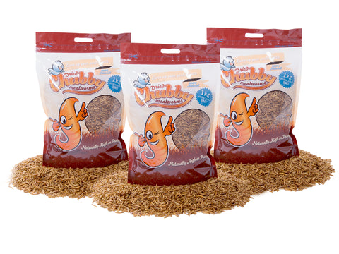 3Kg Chubby Dried Mealworms