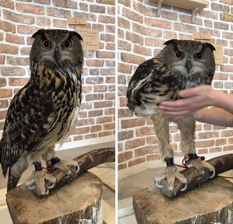 Had no idea owls have such long legs