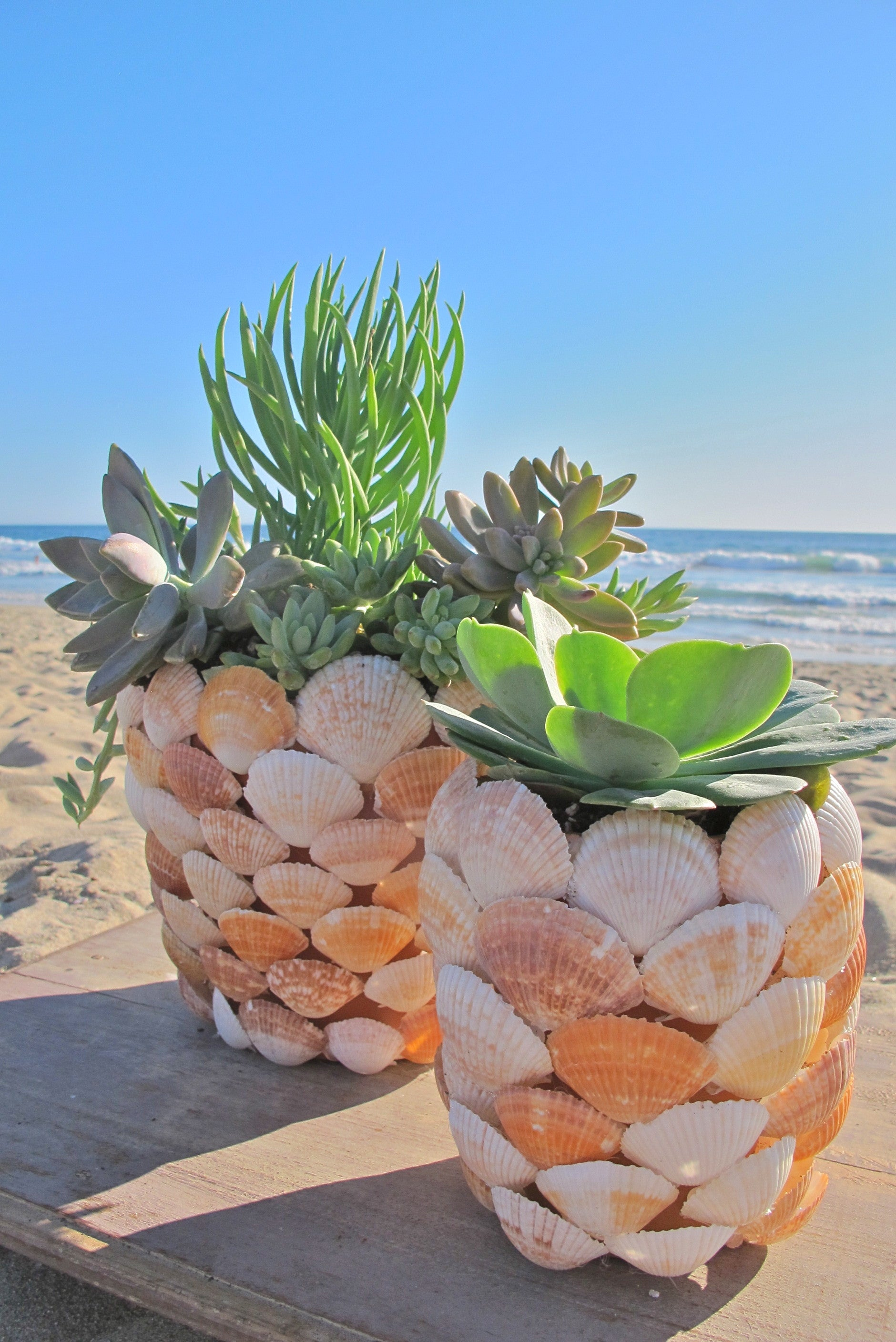 SEA SHELL PLANTER - DIY