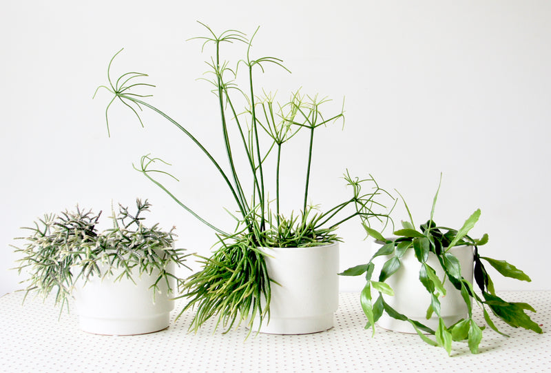 Plant Care 101 - The very basics