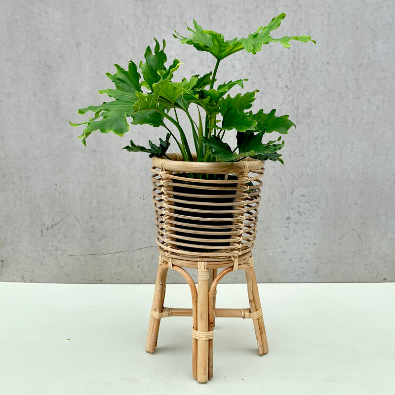 Rattan Plant Stand *Plant NOT Included*