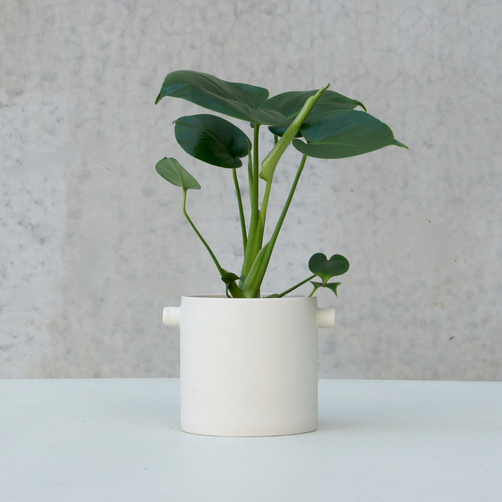 Monstera Deliciosa + Zakkia Handle Pot