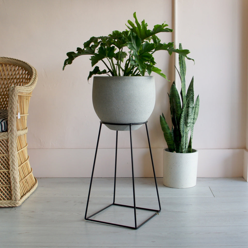 Philodendron Hope + Concrete Pedra Pot + Black Plant stand