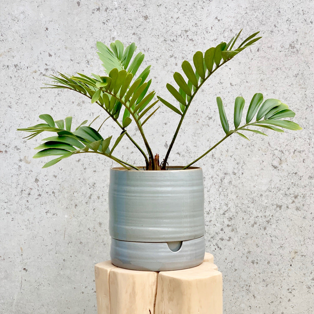 Self Watering Pot Tall / Grey Crackle