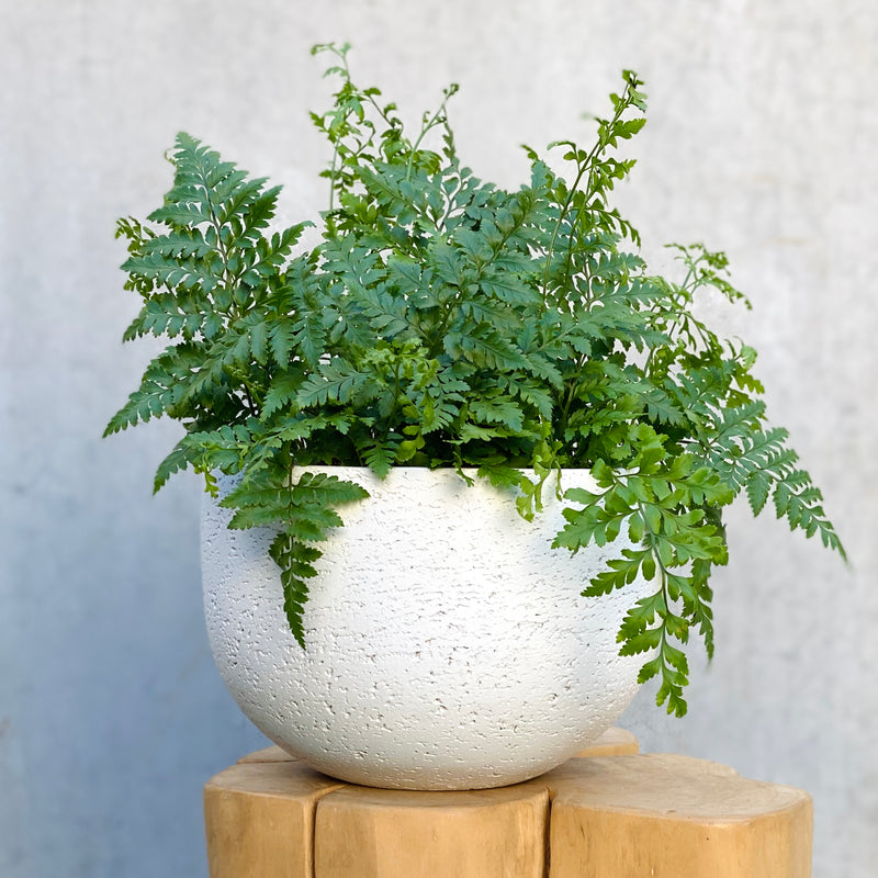 Leather Fern + Pixie Bowl White