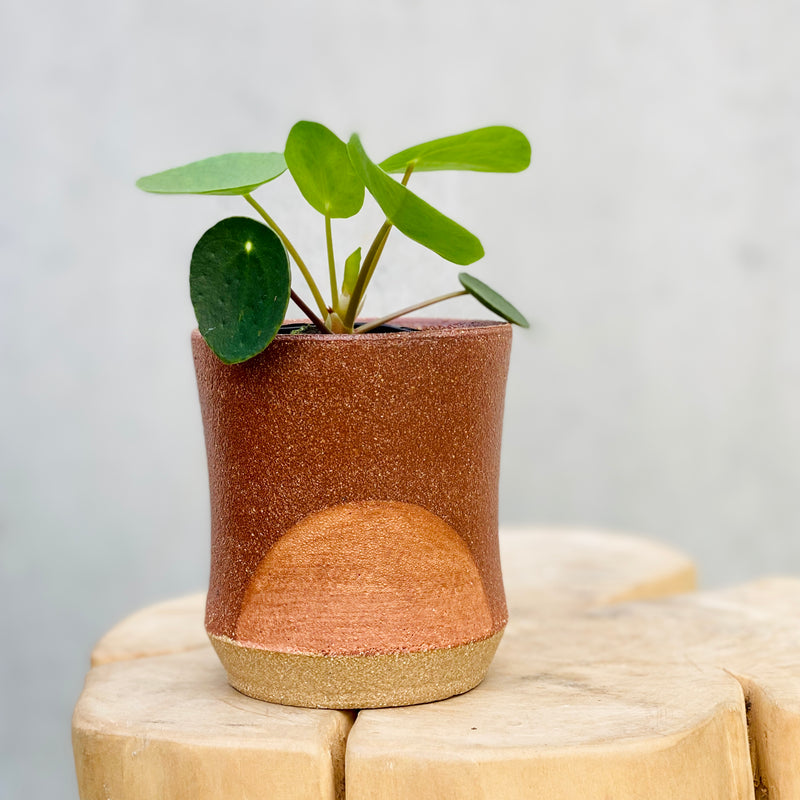 Chinese Money Plant + Peta Armstrong Handmade Planter Mini Pink