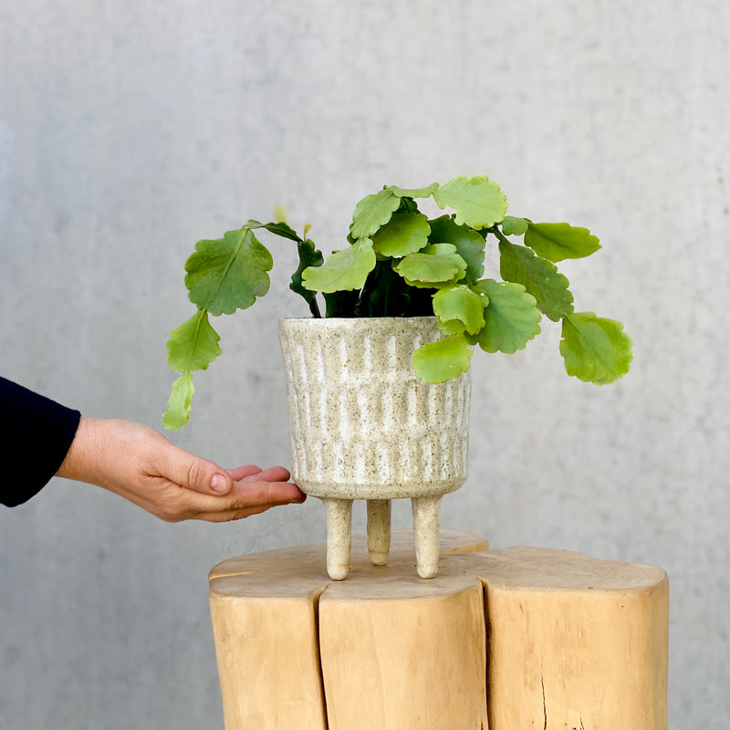 Peta Armstrong Handmade Textured Planter (POT ONLY)