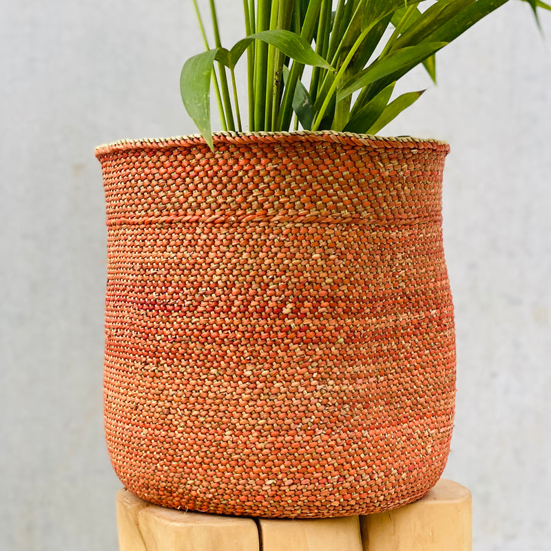 Kentia Palm + Sondu Basket Medium Terracotta