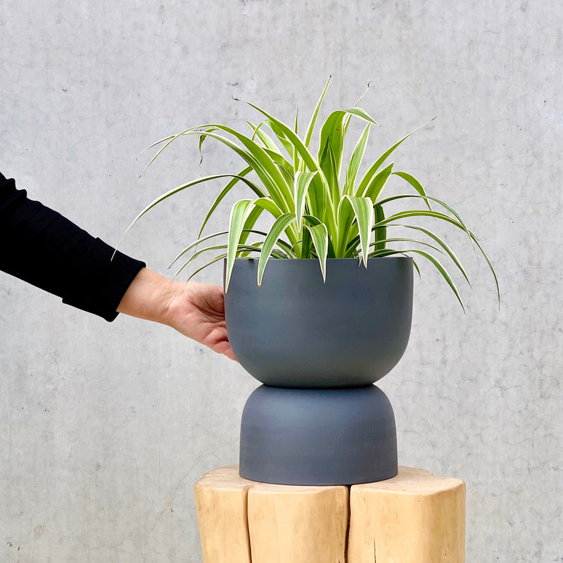 Spider Plant + Raw Earth Planter Charcoal